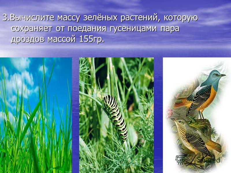 3.Вычислите массу зелёных растений, которую сохраняет от поедания гусеницами пара дроздов массой 155гр.