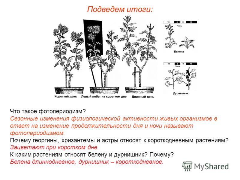 Подведем итоги: Что такое фотопериодизм? Сезонные изменения физиологической активности живых организмов в ответ на изменение продолжительности дня и ночи называют фотопериодизмом. Почему георгины, хризантемы и астры относят к короткодневным растениям
