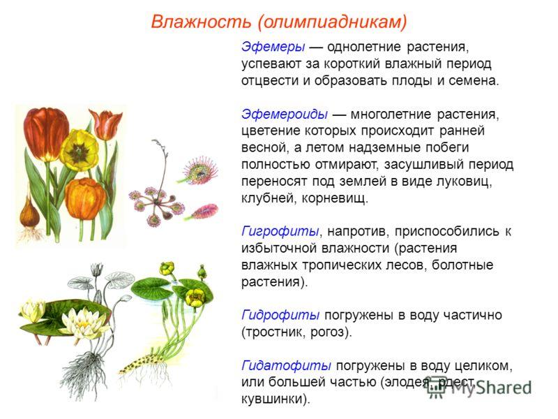 Влажность (олимпиадникам) Эфемеры однолетние растения, успевают за короткий влажный период отцвести и образовать плоды и семена. Эфемероиды многолетние растения, цветение которых происходит ранней весной, а летом надземные побеги полностью отмирают,
