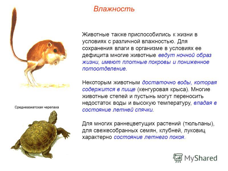 Влажность Животные также приспособились к жизни в условиях с различной влажностью. Для сохранения влаги в организме в условиях ее дефицита многие животные ведут ночной образ жизни, имеют плотные покровы и пониженное потоотделение. Некоторым животным