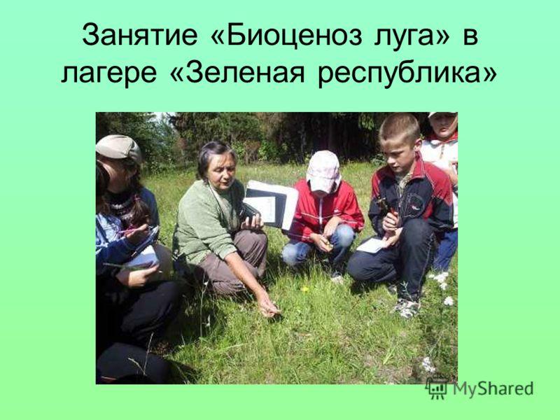 Занятие «Биоценоз луга» в лагере «Зеленая республика»