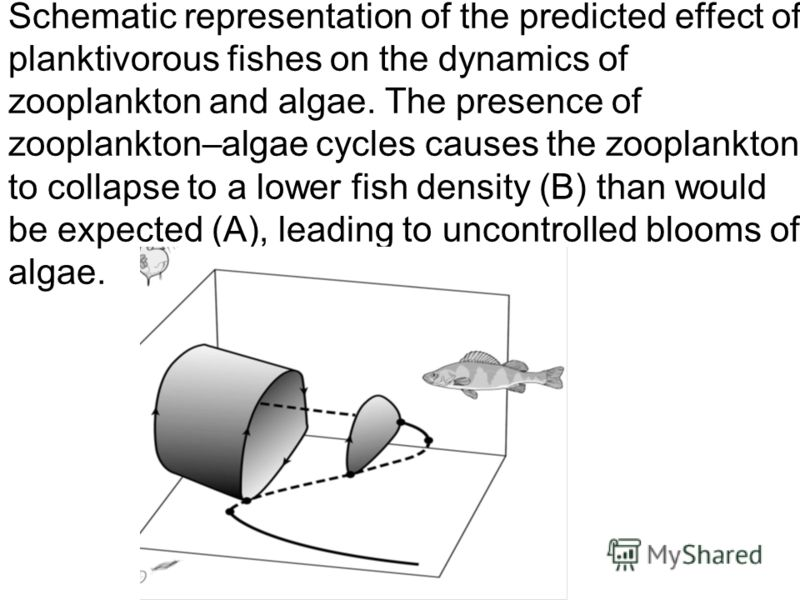 Schematic representation of the predicted effect of planktivorous fishes on the dynamics of zooplankton and аlgae. The presence of zooplankton–algae cycles causes the zooplankton to collapse to a lower fish density (B) than would be expected (A), lea
