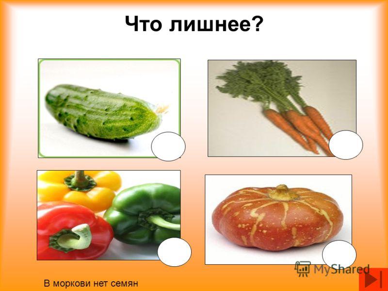 Что лишнее? В моркови нет семян