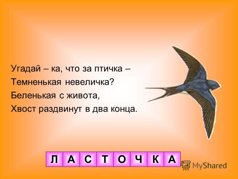 Угадай – ка, что за птичка – Темненькая невеличка? Беленькая с живота, Хвост раздвинут в два конца. ЛАСТОЧКА