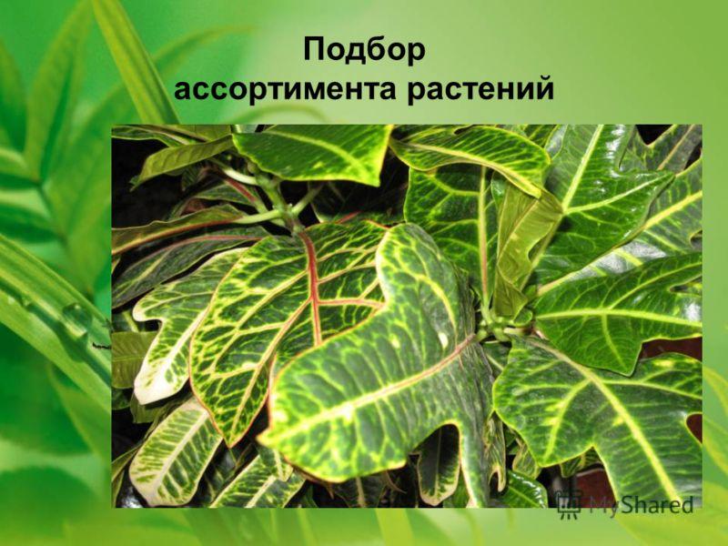 Подбор ассортимента растений