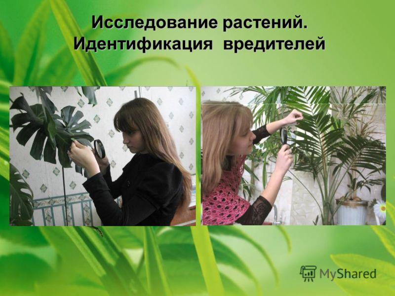 Исследование растений. Идентификация вредителей