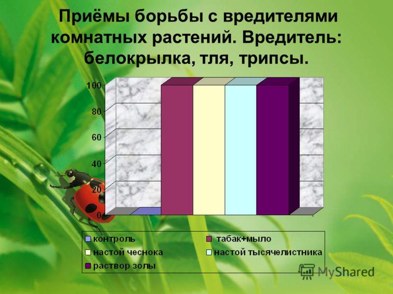 Приёмы борьбы с вредителями комнатных растений. Вредитель: белокрылка, тля, трипсы.