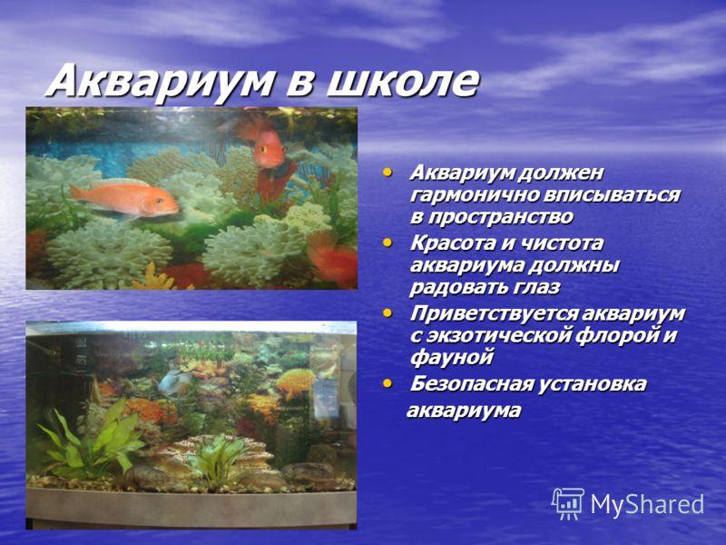 Аквариум в школе Аквариум должен гармонично вписываться в пространство Аквариум должен гармонично вписываться в пространство Красота и чистота аквариума должны радовать глаз Красота и чистота аквариума должны радовать глаз Приветствуется аквариум с э