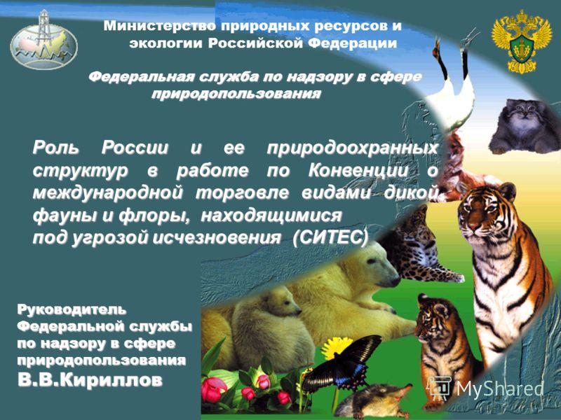 Министерство природных ресурсов и экологии Российской Федерации Федеральная служба по надзору в сфере природопользования Федеральная служба по надзору в сфере природопользования Роль России и ее природоохранных структур в работе по Конвенции о междун