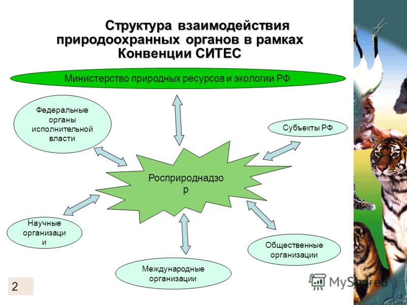 Структура взаимодействия природоохранных органов в рамках Конвенции СИТЕС Структура взаимодействия природоохранных органов в рамках Конвенции СИТЕС 3. Росприроднадзо р Министерство природных ресурсов и экологии РФ Научные организаци и Субъекты РФ Меж