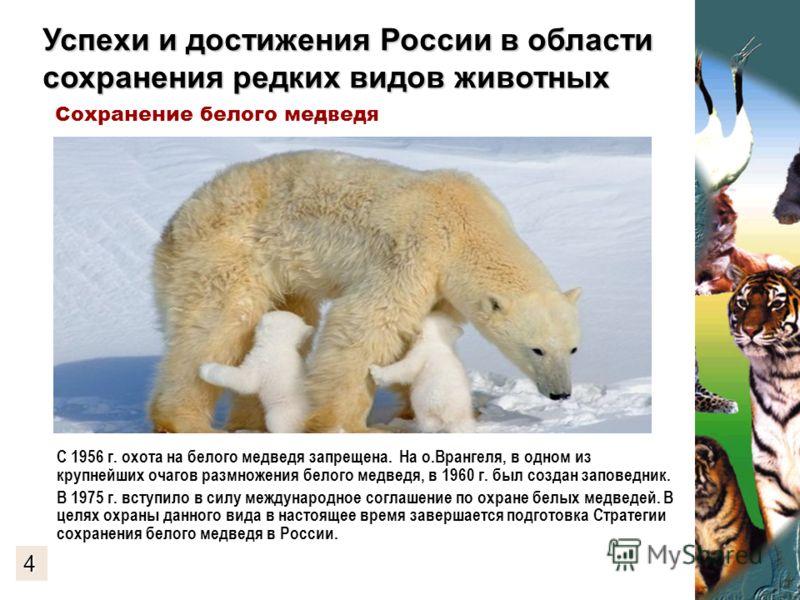 Успехи и достижения России в области сохранения редких видов животных С 1956 г. охота на белого медведя запрещена. На о.Врангеля, в одном из крупнейших очагов размножения белого медведя, в 1960 г. был создан заповедник. В 1975 г. вступило в силу межд