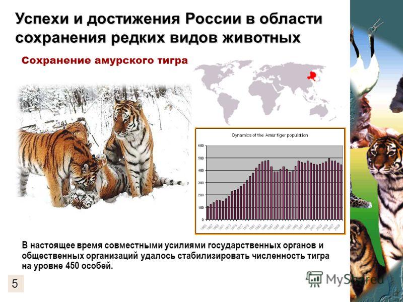 Успехи и достижения России в области сохранения редких видов животных В настоящее время совместными усилиями государственных органов и общественных организаций удалось стабилизировать численность тигра на уровне 450 особей. Сохранение амурского тигра
