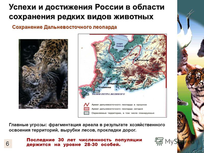Главные угрозы: фрагментация ареала в результате хозяйственного освоения территорий, вырубки лесов, прокладки дорог. Сохранение Дальневосточного леопарда Последние 30 лет численность популяции держится на уровне 28-30 особей. 6 Успехи и достижения Ро