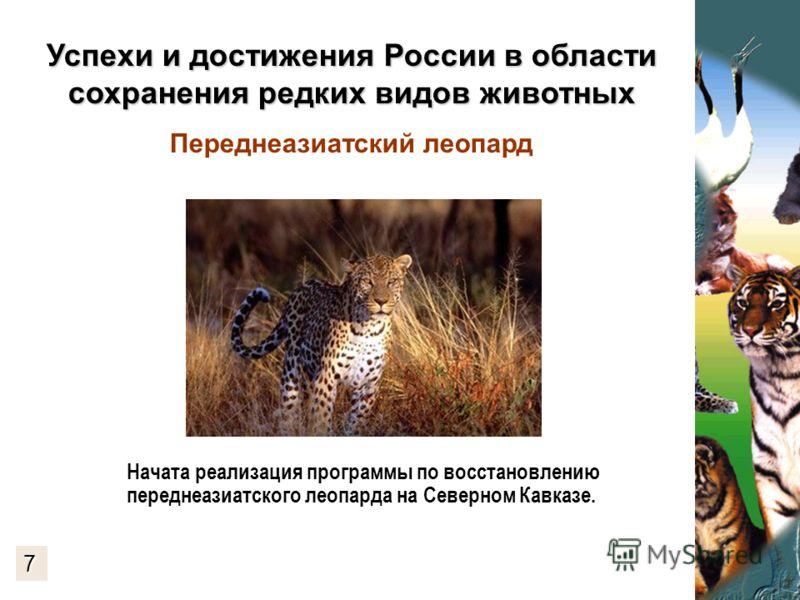 Успехи и достижения России в области сохранения редких видов животных Успехи и достижения России в области сохранения редких видов животных Переднеазиатский леопард Начата реализация программы по восстановлению переднеазиатского леопарда на Северном