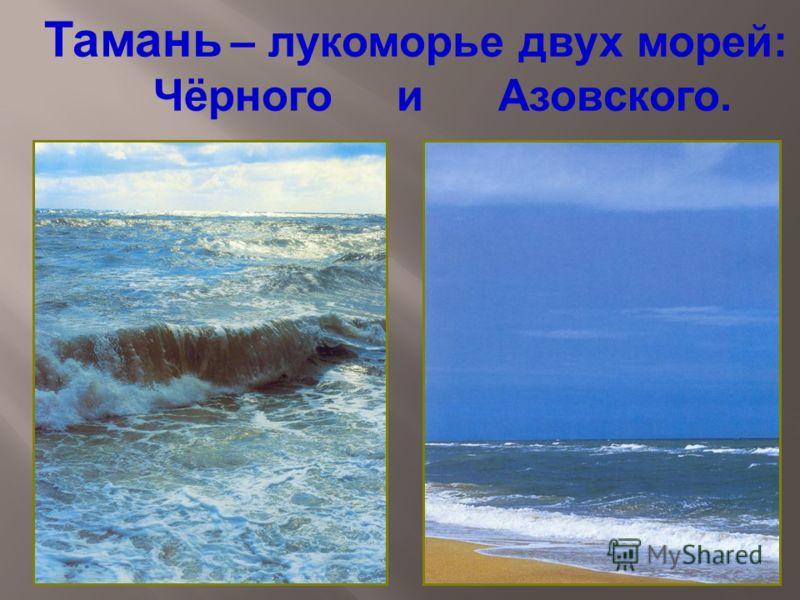 Тамань – лукоморье двух морей: Чёрного и Азовского.