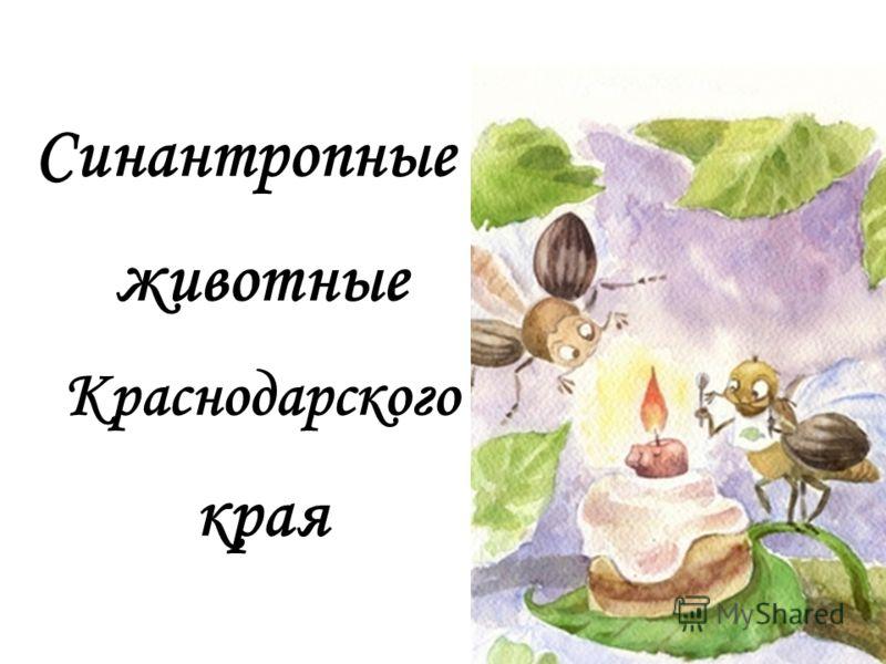 Синантропные животные Краснодарского края