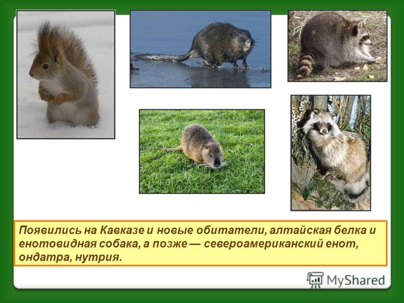В 1924 году был создан Кавказский государственный биосферный заповедник. К моменту его организации в лесах оставалось всего 230 оленей и несколько сотен туров и всего несколько зубров. Теперь в заповеднике живет 7000 оленей, 4000 туров. Сложнее с зуб