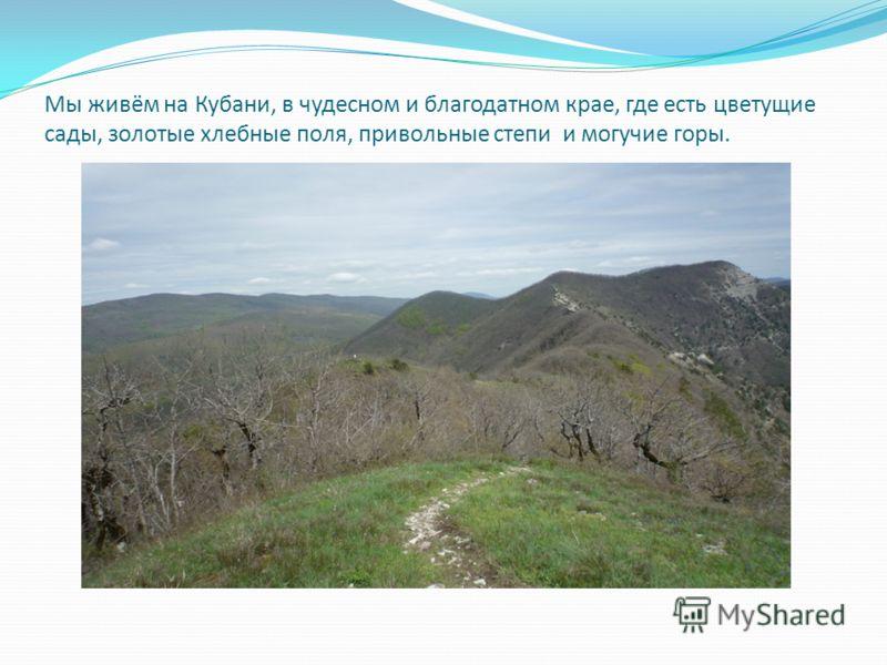 Мы живём на Кубани, в чудесном и благодатном крае, где есть цветущие сады, золотые хлебные поля, привольные степи и могучие горы.