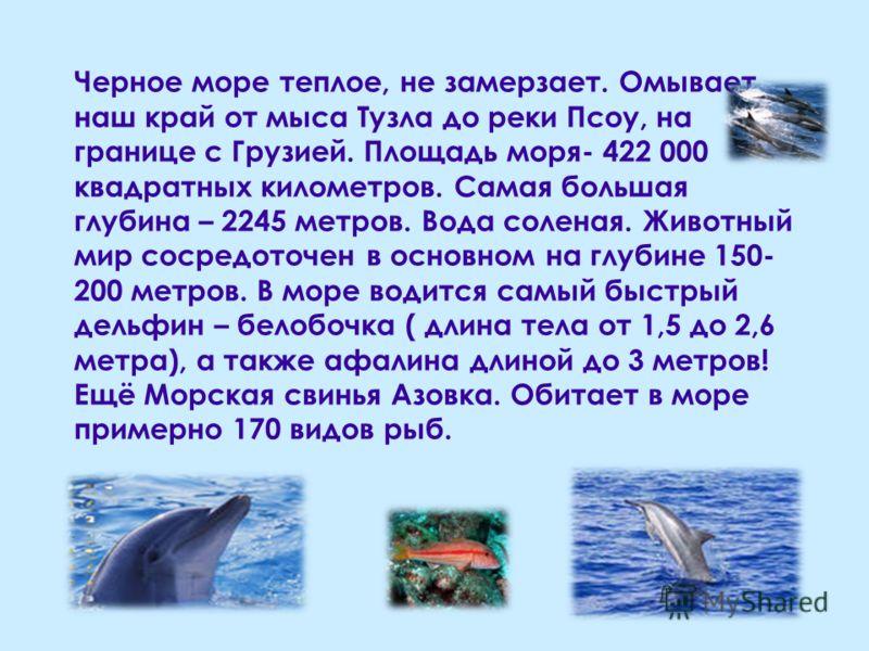 Черное море теплое, не замерзает. Омывает наш край от мыса Тузла до реки Псоу, на границе с Грузией. Площадь моря- 422 000 квадратных километров. Самая большая глубина – 2245 метров. Вода соленая. Животный мир сосредоточен в основном на глубине 150-