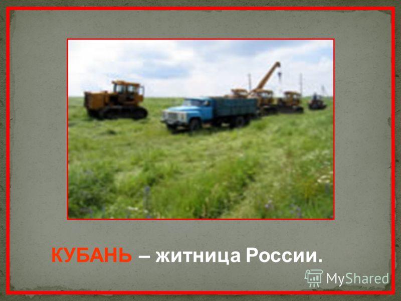 КУБАНЬ – житница России.