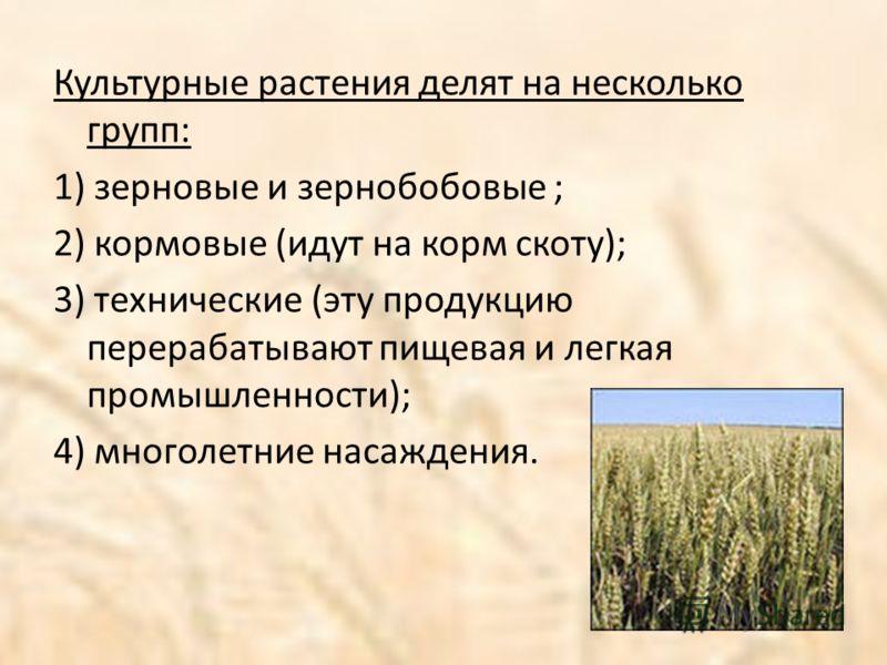 Культурные растения делят на несколько групп: 1) зерновые и зернобобовые ; 2) кормовые (идут на корм скоту); 3) технические (эту продукцию перерабатывают пищевая и легкая промышленности); 4) многолетние насаждения.