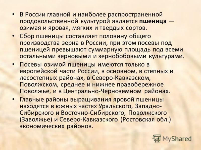 В России главной и наиболее распространенной продовольственной культурой является пшеница озимая и яровая, мягких и твердых сортов. Сбор пшеницы составляет половину общего производства зерна в России, при этом посевы под пшеницей превышают суммарную