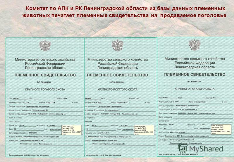 Комитет по АПК и РК Ленинградской области из базы данных племенных животных печатает племенные свидетельства на продаваемое поголовье