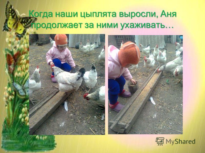 Когда наши цыплята выросли, Аня продолжает за ними ухаживать…