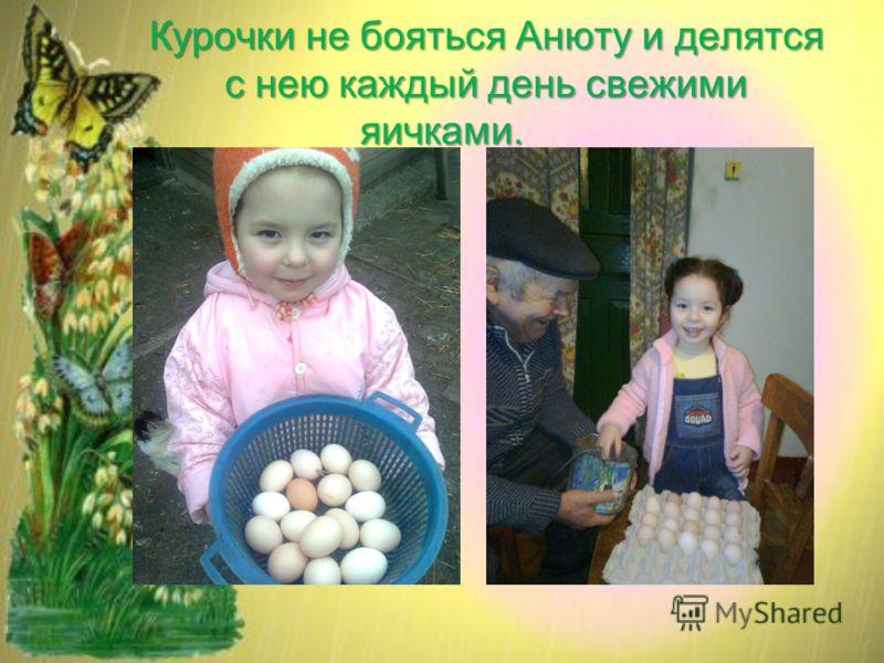 Курочки не бояться Анюту и делятся с нею каждый день свежими яичками.