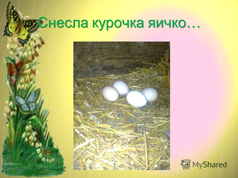 Снесла курочка яичко…