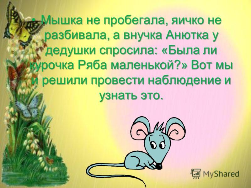 Мышка не пробегала, яичко не разбивала, а внучка Анютка у дедушки спросила: «Была ли курочка Ряба маленькой?» Вот мы и решили провести наблюдение и узнать это.Мышка не пробегала, яичко не разбивала, а внучка Анютка у дедушки спросила: «Была ли курочк