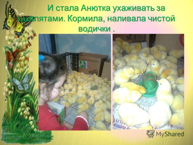 И стала Анютка ухаживать за цыплятами. Кормила, наливала чистой водички.