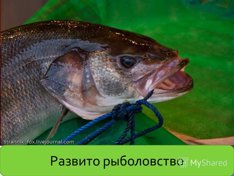 Развито рыболовство