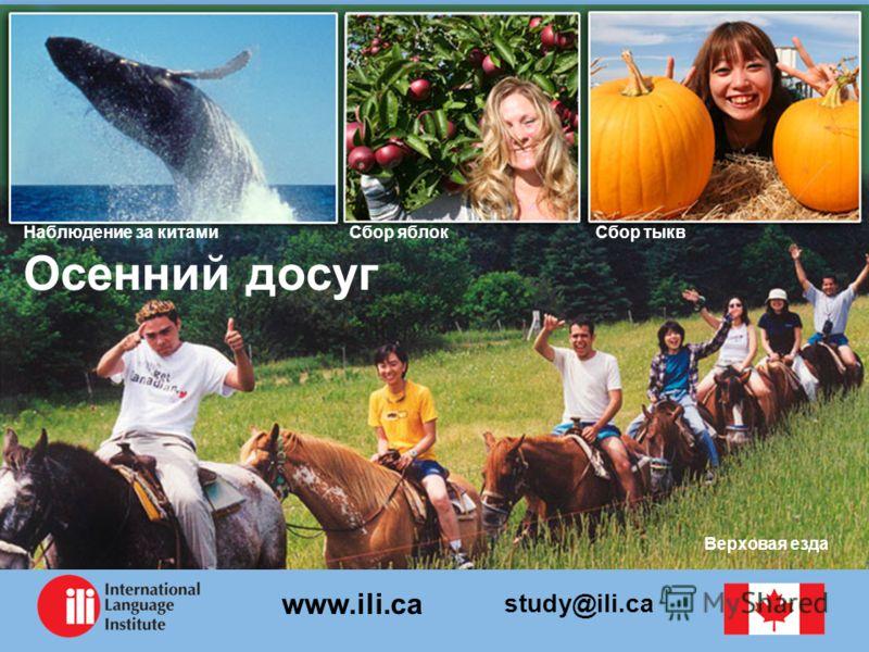 study@ili.ca www.ili.ca Осенний досуг Сбор тыквСбор яблокНаблюдение за китами Верховая езда