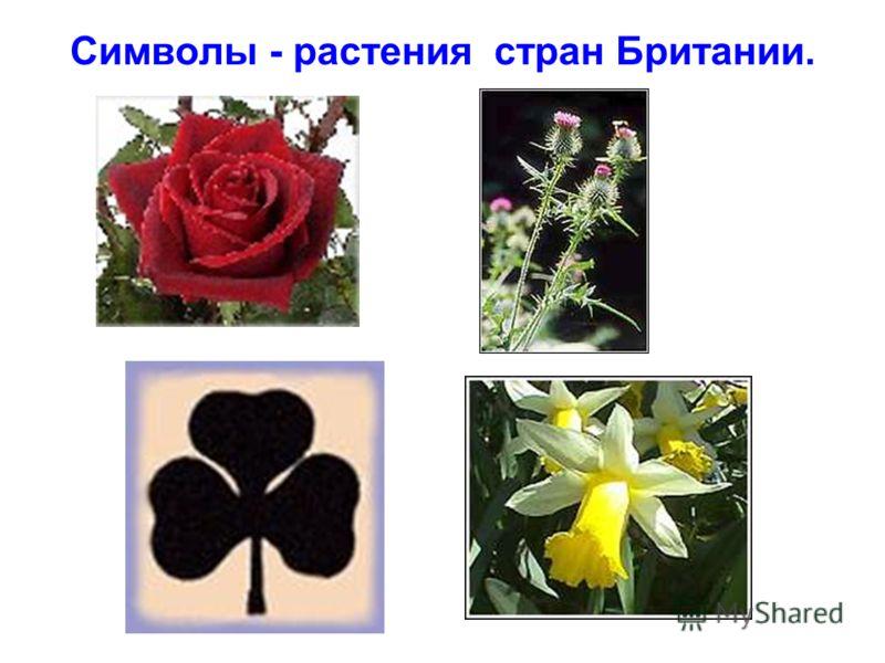 Символы - растения стран Британии.