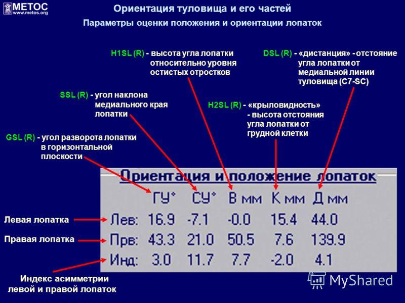 Ориентация туловища и его частей Параметры оценки положения и ориентации лопаток Левая лопатка Правая лопатка GSL (R) - угол разворота лопатки в горизонтальной плоскости SSL (R) - угол наклона медиального края лопатки H1SL (R) - высота угла лопатки о