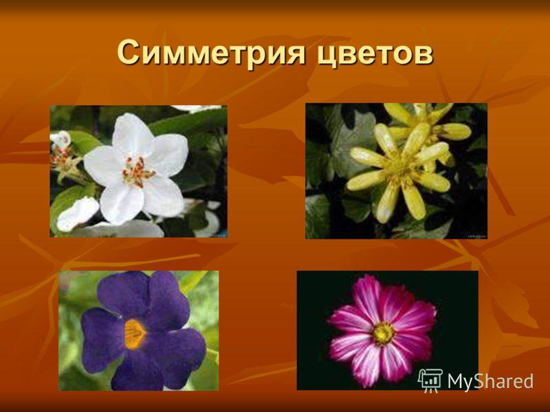 Симметрия цветов