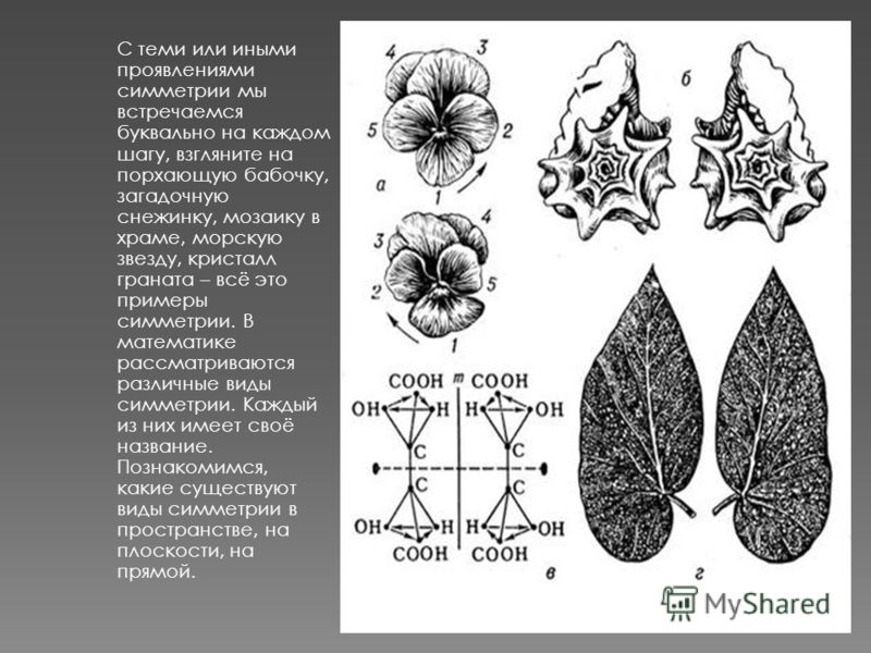 С теми или иными проявлениями симметрии мы встречаемся буквально на каждом шагу, взгляните на порхающую бабочку, загадочную снежинку, мозаику в храме, морскую звезду, кристалл граната – всё это примеры симметрии. В математике рассматриваются различны
