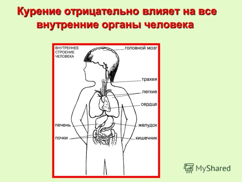 Курение отрицательно влияет на все внутренние органы человека Курение отрицательно влияет на все внутренние органы человека
