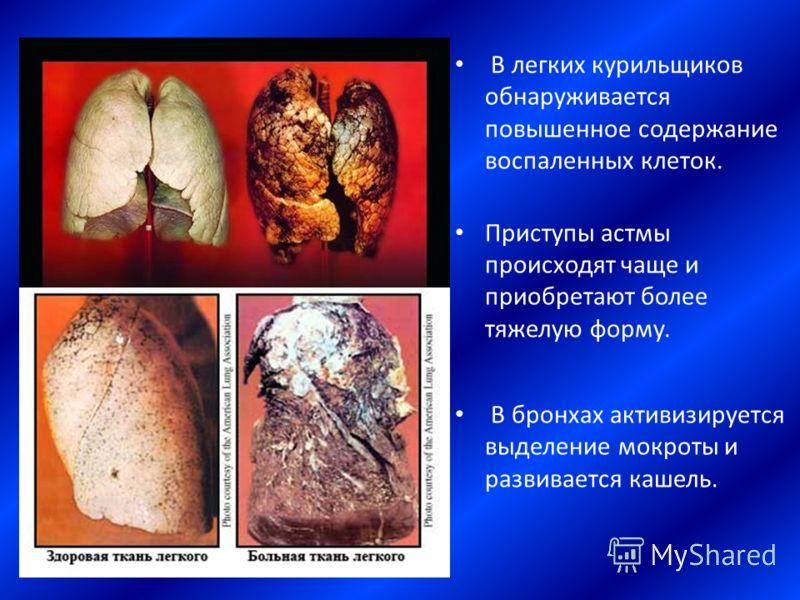 В легких курильщиков обнаруживается повышенное содержание воспаленных клеток. Приступы астмы происходят чаще и приобретают более тяжелую форму. В бронхах активизируется выделение мокроты и развивается кашель.