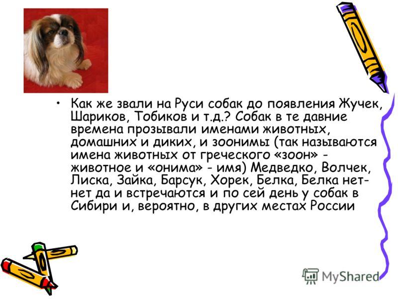 Как же звали на Руси собак до появления Жучек, Шариков, Тобиков и т.д.? Собак в те давние времена прозывали именами животных, домашних и диких, и зоонимы (так называются имена животных от греческого «зоон» - животное и «онима» - имя) Медведко, Волчек