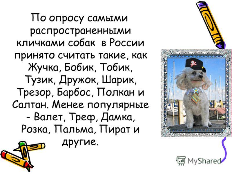 По опросу самыми распространенными кличками собак в России принято считать такие, как Жучка, Бобик, Тобик, Тузик, Дружок, Шарик, Трезор, Барбос, Полкан и Салтан. Менее популярные - Валет, Треф, Дамка, Розка, Пальма, Пират и другие.
