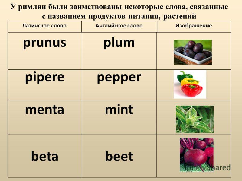 prunusplum piperepepper mentamint betabeet Латинское словоАнглийское словоИзображение У римлян были заимствованы некоторые слова, связанные с названием продуктов питания, растений