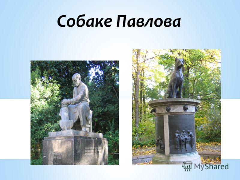 Собаке Павлова