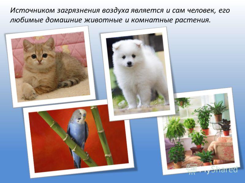 Источником загрязнения воздуха является и сам человек, его любимые домашние животные и комнатные растения.