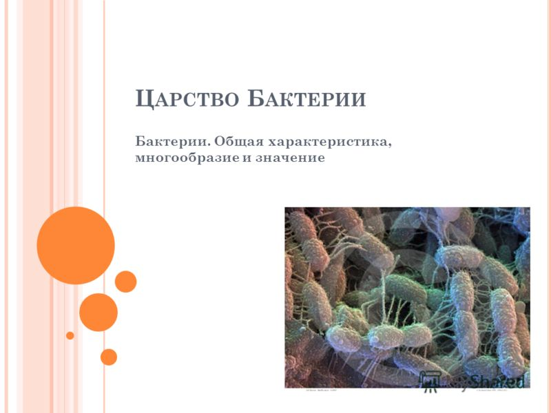 Ц АРСТВО Б АКТЕРИИ Бактерии. Общая характеристика, многообразие и значение