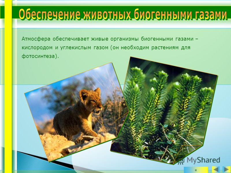 Атмосфера обеспечивает живые организмы биогенными газами – кислородом и углекислым газом (он необходим растениям для фотосинтеза). е