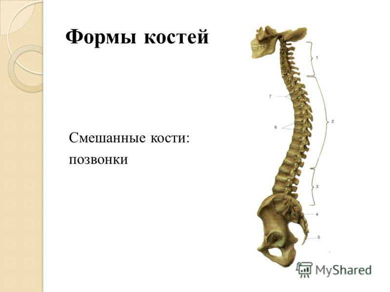 Формы костей Смешанные кости: позвонки