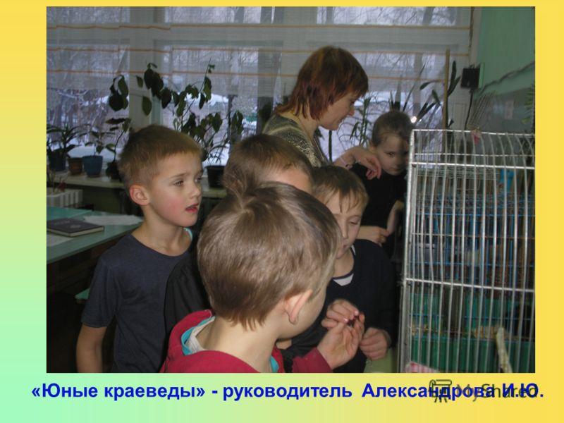«Юные краеведы» - руководитель Александрова И.Ю.