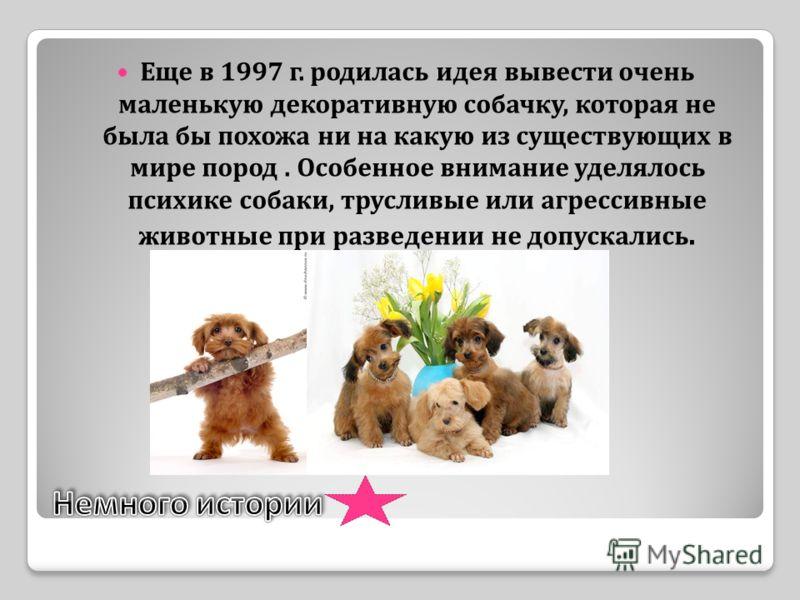 Еще в 1997 г. родилась идея вывести очень маленькую декоративную собачку, которая не была бы похожа ни на какую из существующих в мире пород. Особенное внимание уделялось психике собаки, трусливые или агрессивные животные при разведении не допускалис